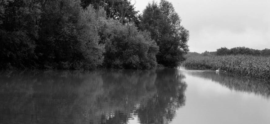 Popoplavna bioremediacija prizadetih površin v Prekmurju