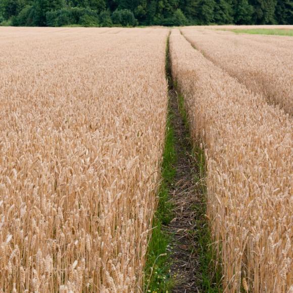 Tla in varstvo rastlin